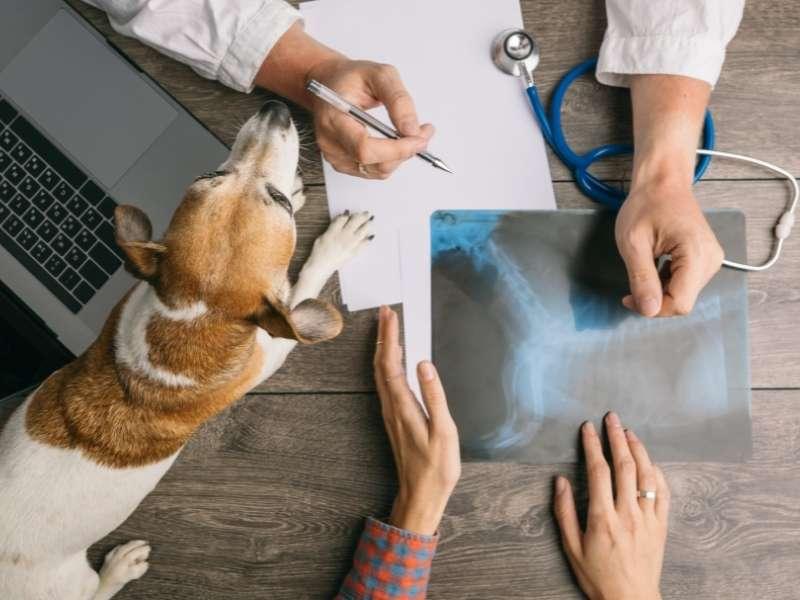 Vælg det rigtige lån til afbetaling af dyrelægeregningen - dyrlægeregning på afbetaling?